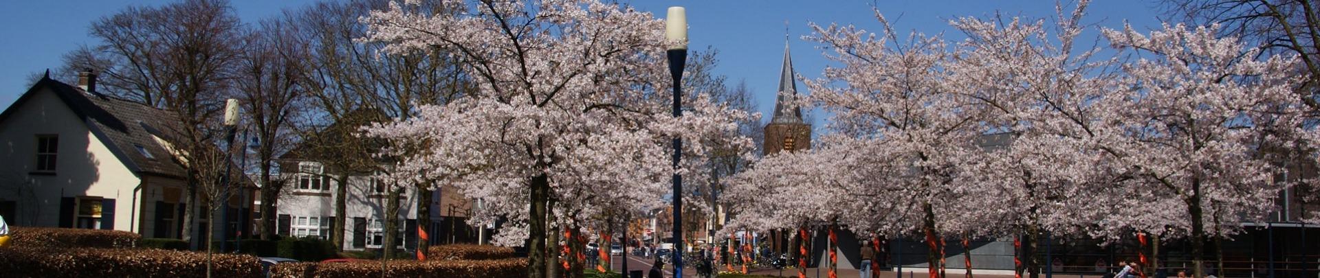 Fruitbomen met kerktoren op de achtergrond